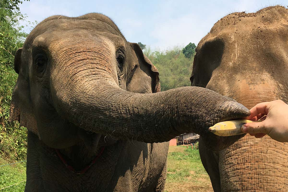 geneticliteracyproject.org - Elephants are clever problem solvers - and they have distinct personalities, too
