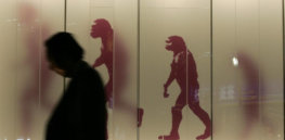 Why the famous 'march of human evolution' illustration is so misleading