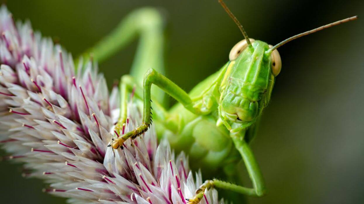 An activist-based PR campaign is poised to claim that the Earth faces a Silent Spring-like 'insect armageddon.' Will The New York Times and other media fall for the 'hysteria con' once again?