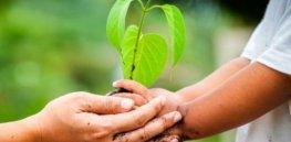 Organic vs. conventional farming: Which has lower environmental impacts?