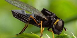 Concerned about insect declines? AI pollinating robots could come to the rescue