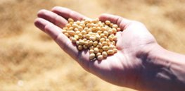 To adapt to changing climates, we need to overhaul how we breed corn and soybeans
