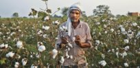 'Despite the challenges of misinformation, the technology has enjoyed the confidence of farmers, researchers and policymakers': Bt insect-resistant cotton celebrates 20 years of increased productivity