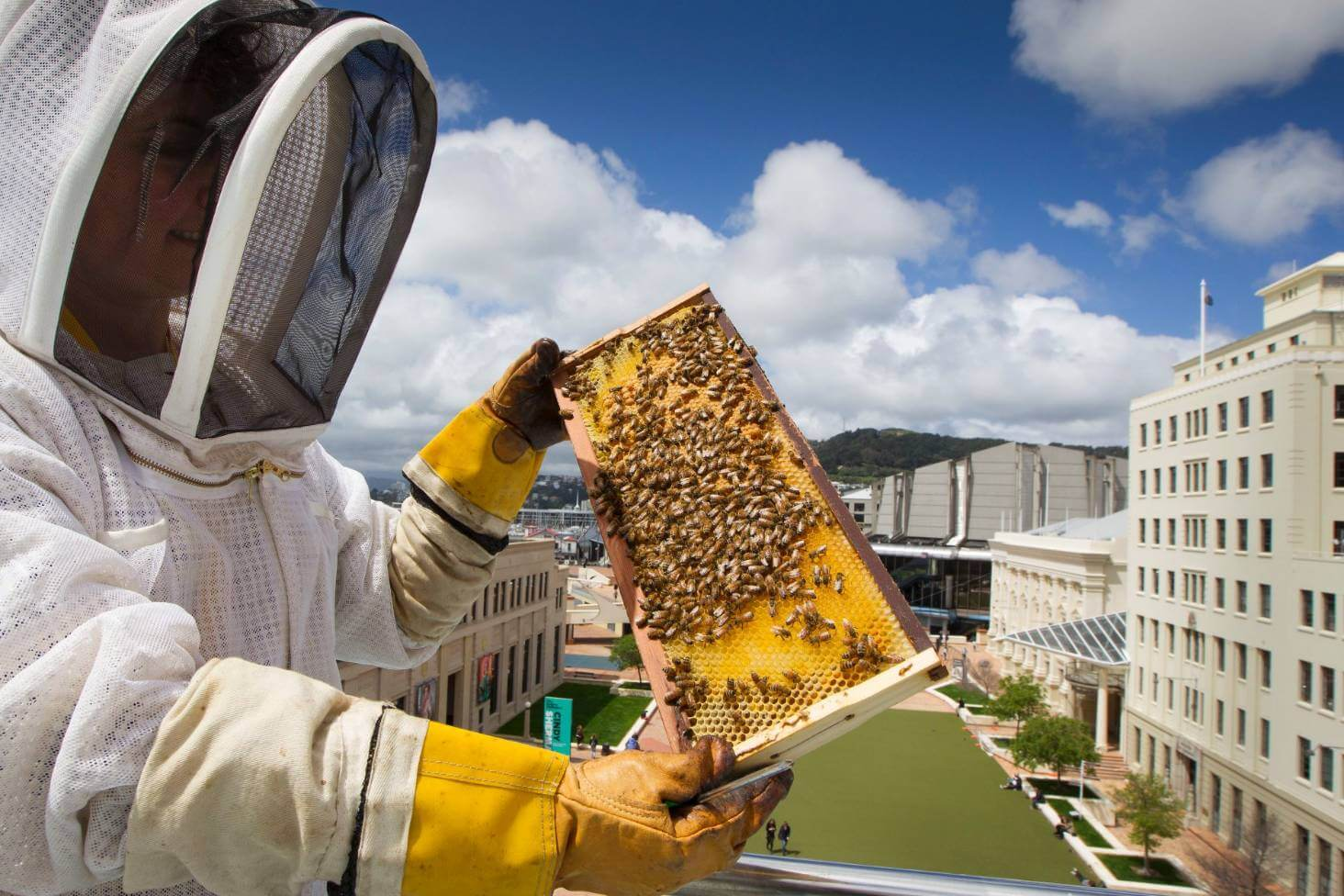 Video: Good intentions aren't enough — Attempts to protect wild bees has gone awry and an influx of imported honeybees are doing more harm than good to native populations