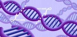 CRISPR opens the door to altering nature. What could go right — and wrong?