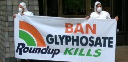 'War on glyphosate' and the unintended negative environmental consequences of the demonization of a safe and effective herbicide and its removal from the garden market
