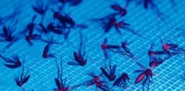 'Phenomenal advancements' in gene drive technology to eradicate disease-carrying mosquitoes