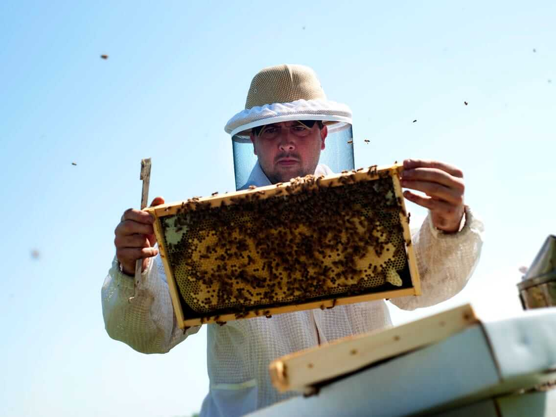 Scorching western drought weakens honeybees, threatening almond and fruit crops