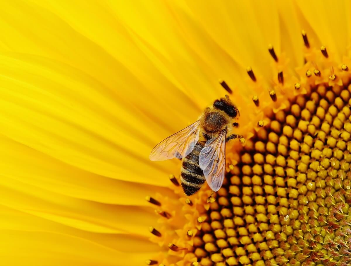 First global index of pollinator population changes: Habitat loss and land management are primary drivers, with pesticides last