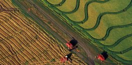 RNA tweak: Engineering rice and potato plants boosts yields by 50%