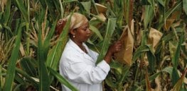 Part 2: Viewpoint — Digging into the 'prejudices' that have plagued the Cartagena Protocol's misguidance on international regulation of agricultural biotechnology