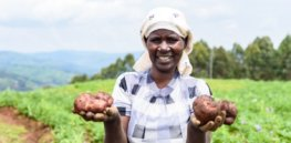 Breeding to battle potato late blight disease in Uganda: What once took 46 years, now takes just a few with biotechnology
