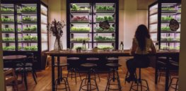 Vertical farms inside restaurants? How hydroponics is creating a natural farming future — indoors