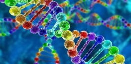 Intriguing new clues revealed about the genetics and evolution of homosexuality