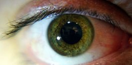 'Eyes are a window to the brain?' Pupil size emerges as a marker of intelligence