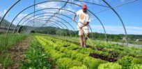 Academic study: 'We challenge the widespread appraisal that organic farming is the fundamental alternative to conventional farming for harnessing biodiversity in agricultural landscapes'