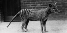 The de-extinction club: Scientists plot to restore the Tasmanian tiger and other extinct species