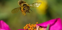 Managed honeybee and bumble bee colonies in the US are up as much as 85%, a 60 year high, as independent researchers challenge bee apocalypse narrative