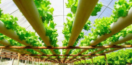 Dismissing sizable sustainability benefits, organic industry petitions USDA to block hydroponics from being classified as organic