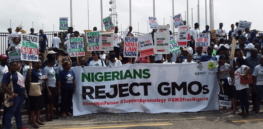 Viewpoint: 'Endless war' — Nigeria and other African countries challenged by conflicting claims about benefits and alleged unknowns of GMO crops