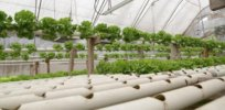 'Science-based farming optimized for reduced environmental impact': What's behind the hydroponic farming boom — and attempts to deny its sustainability advantages?