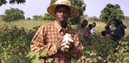 Zimbabwean farmers push for GMO cotton approval after South Africa, Sudan, Botswana, Malawi and Burkina Faso see increased outputs and poverty reduction