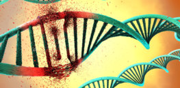 To learn, our brain cells routinely break and rebuild DNA. That insight is sparking a rethink of disease and aging