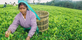 Viewpoint: Sri Lanka economic crisis deepens as recently-imposed chemical fertilizer ban stirs inflation in a country already suffering from the pandemic