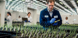 Viewpoint: European political opposition to genetically modified crops softens while US anti-glyphosate hysteria rages