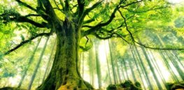 Genetically engineered trees offer dual sustainability benefits: Carbon sequestration boosts and the ability to grow more trees on less land