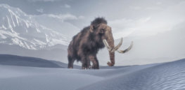 Viewpoint: 'Mammoth debacle' — The not-so-encouraging backstory to George Church's $15 million start-up hoping to resurrect the extinct wooly mammoth