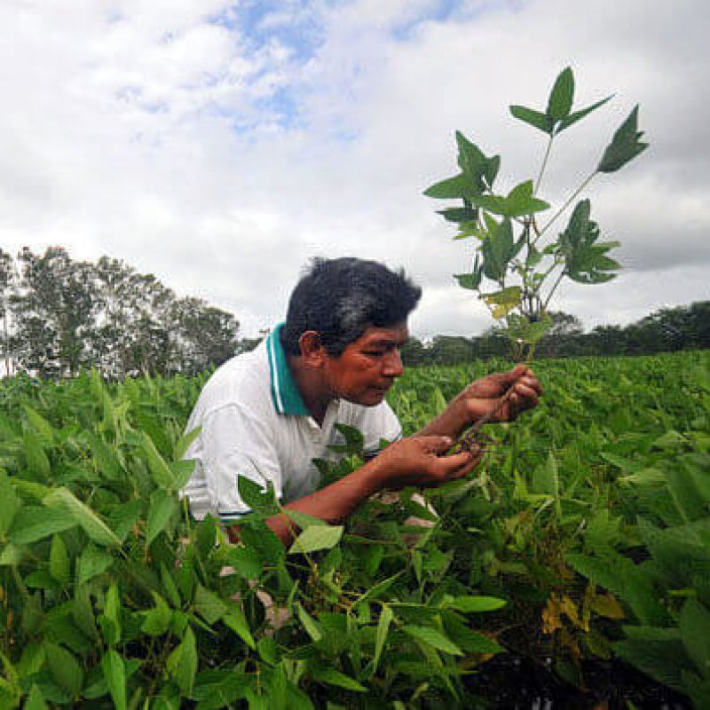 ae px Bolivia soybean e