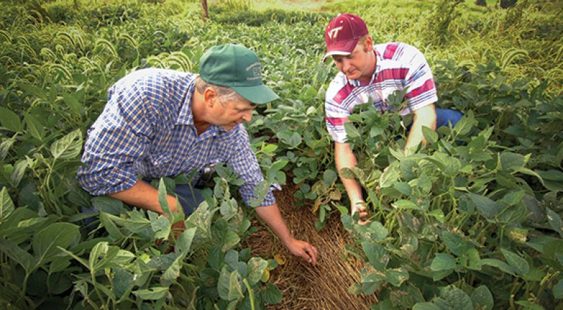 Viewpoint: There's nothing wrong with organic farming, but it's not the 'pinnacle of sustainability'