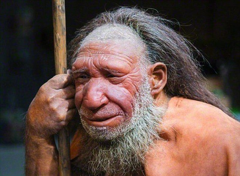 EFE scientists have pinpointed when we last shared a common ancestor a e