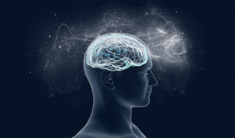 The human brain tripled in size due to ecological factors x