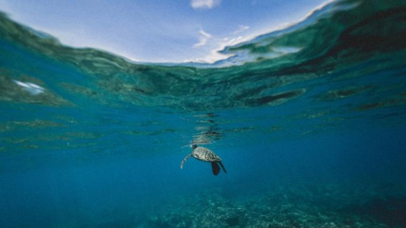 ocean heat waves are increasing e
