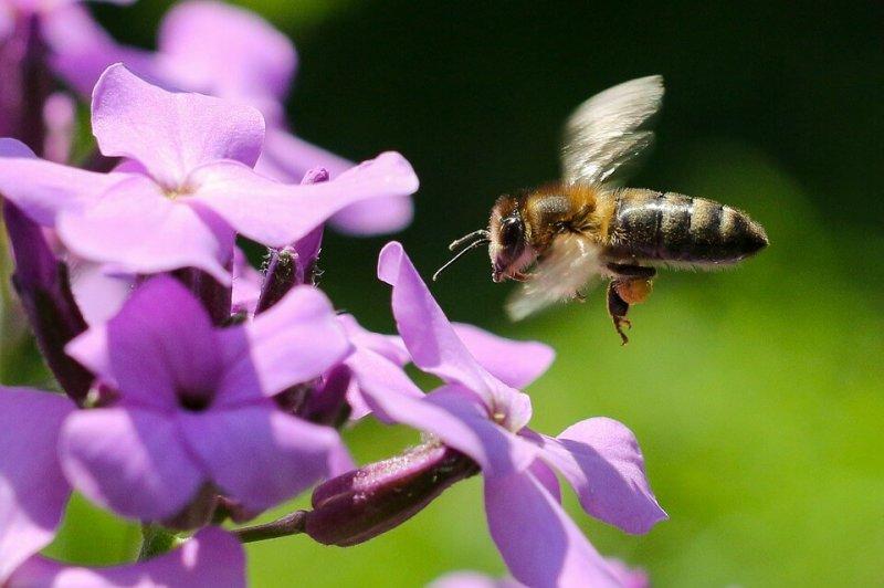 Bee Pollen Collect Honey Macro Summer Flower