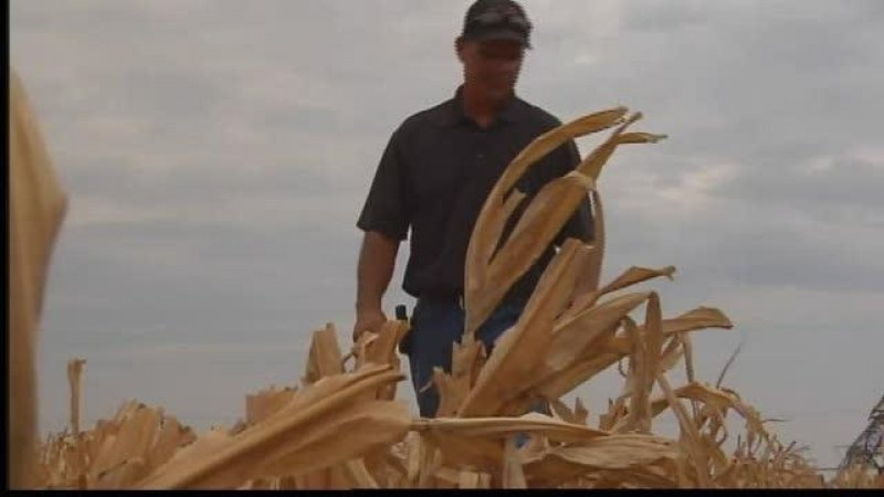 Colorado Drought Could Lead To More GMO Crops ver