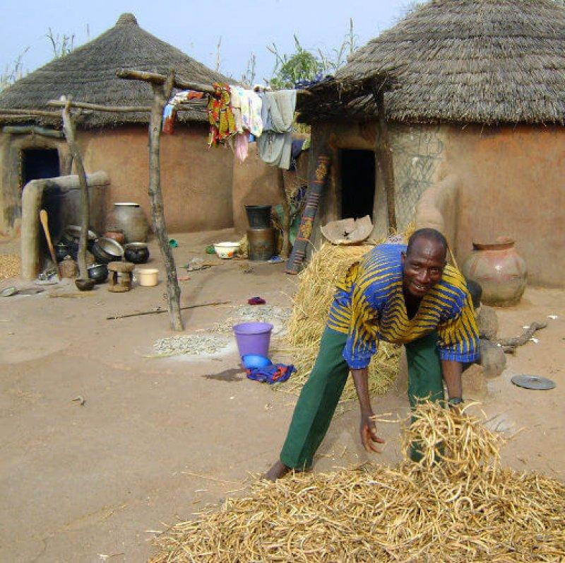 Cowpea drying TREEAID e