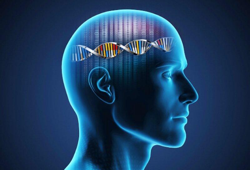 DNA brain