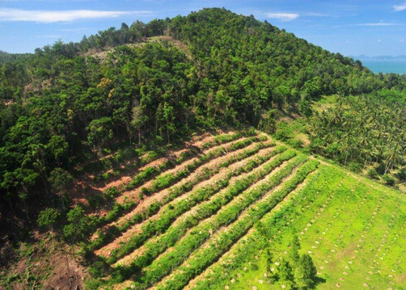 Habitat destruction Rain forest destruction in thailand form Aerial view