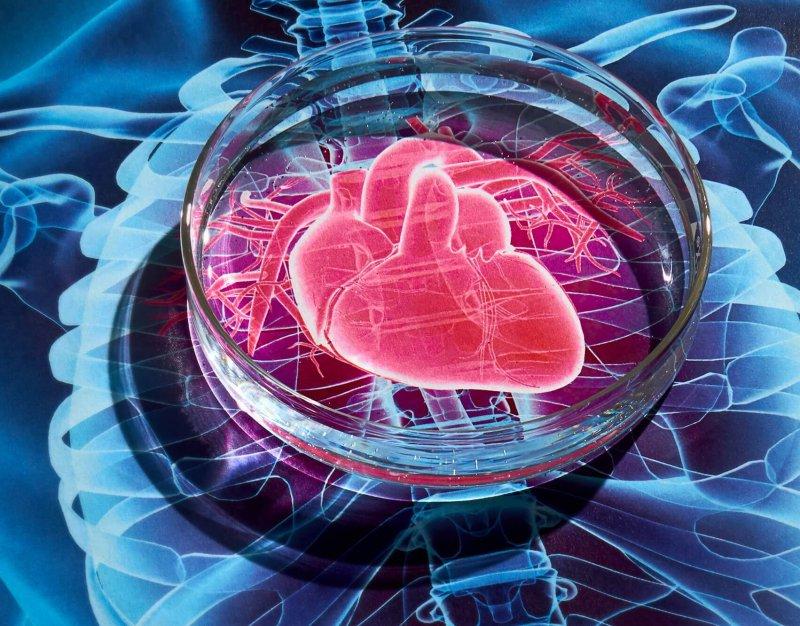Heart c horizontal