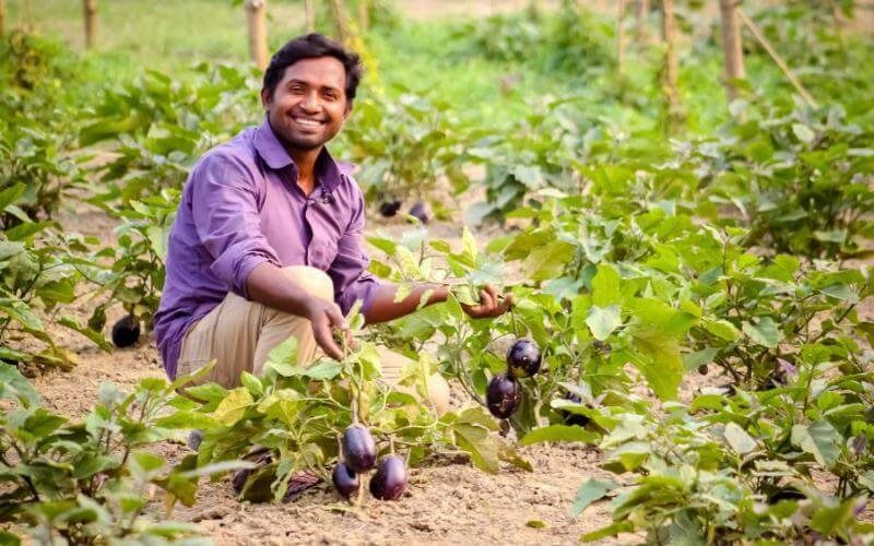 Farmer Hafizur Rahman, resident of Tangail district north of Dhaka, is now on his second year of growing pest-resistant Bt brinjal. Credit: Feed the Future