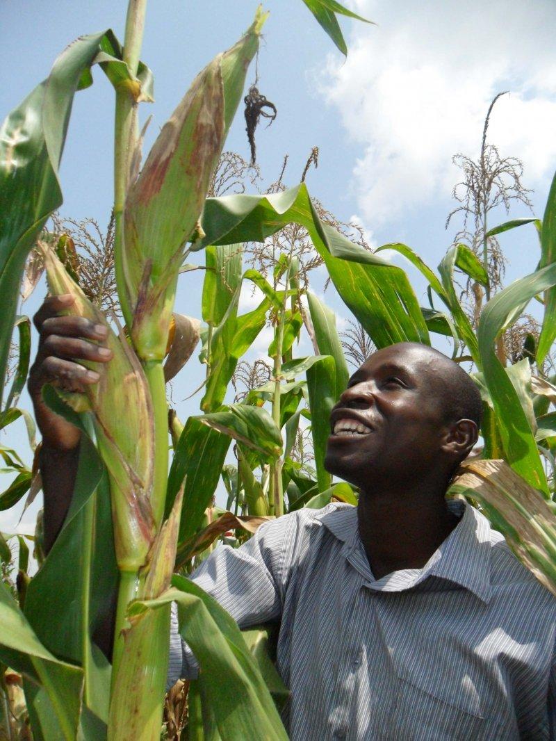 Isaac Okwanyi admires a maize crop on his farm