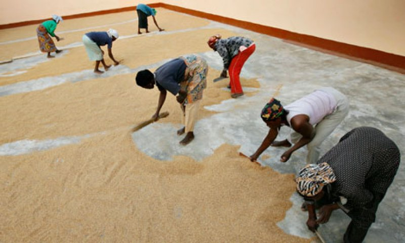 MDG MGO in Ghana Farmer