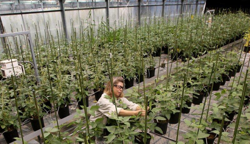 MonsantoResearchFacility