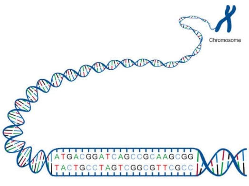 NIH image