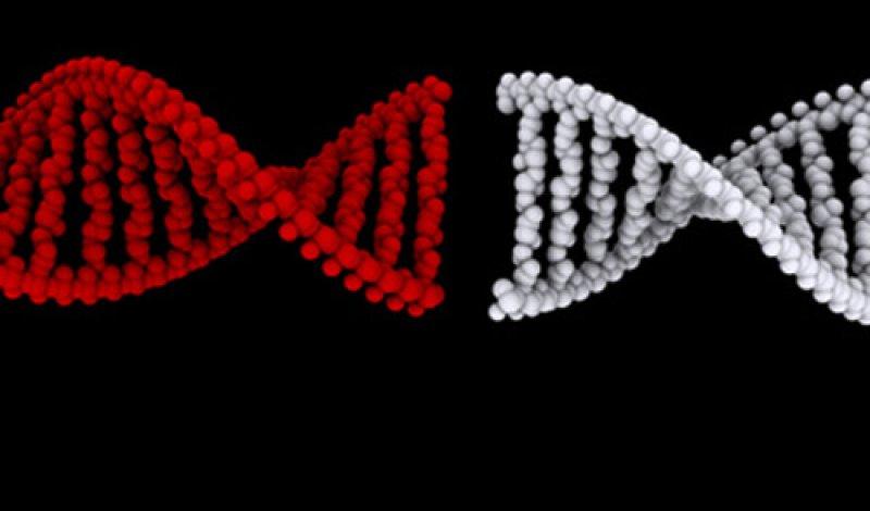 Nov RedWhiteDNALinkingUp GeneTherapyGlybera