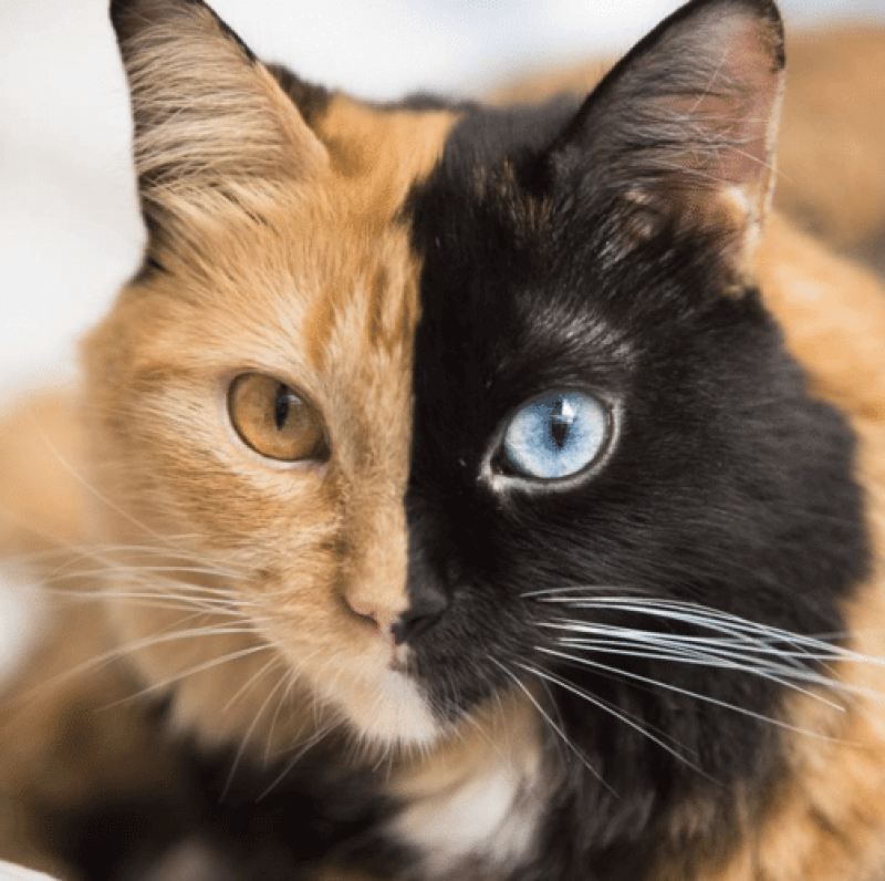 Video cat bosanski Cats Organized
