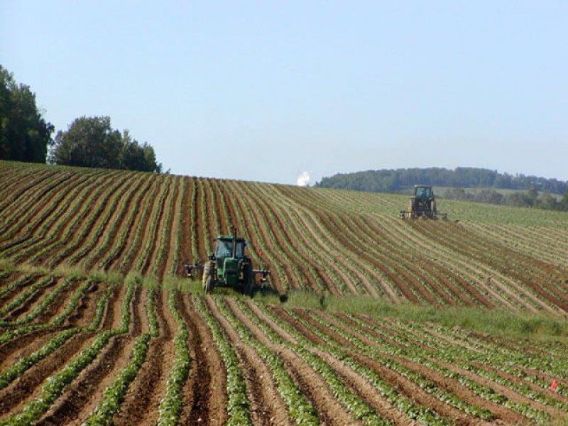 Tractors in Potato Field
